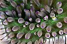 Abstract anemone by David Wachenfeld