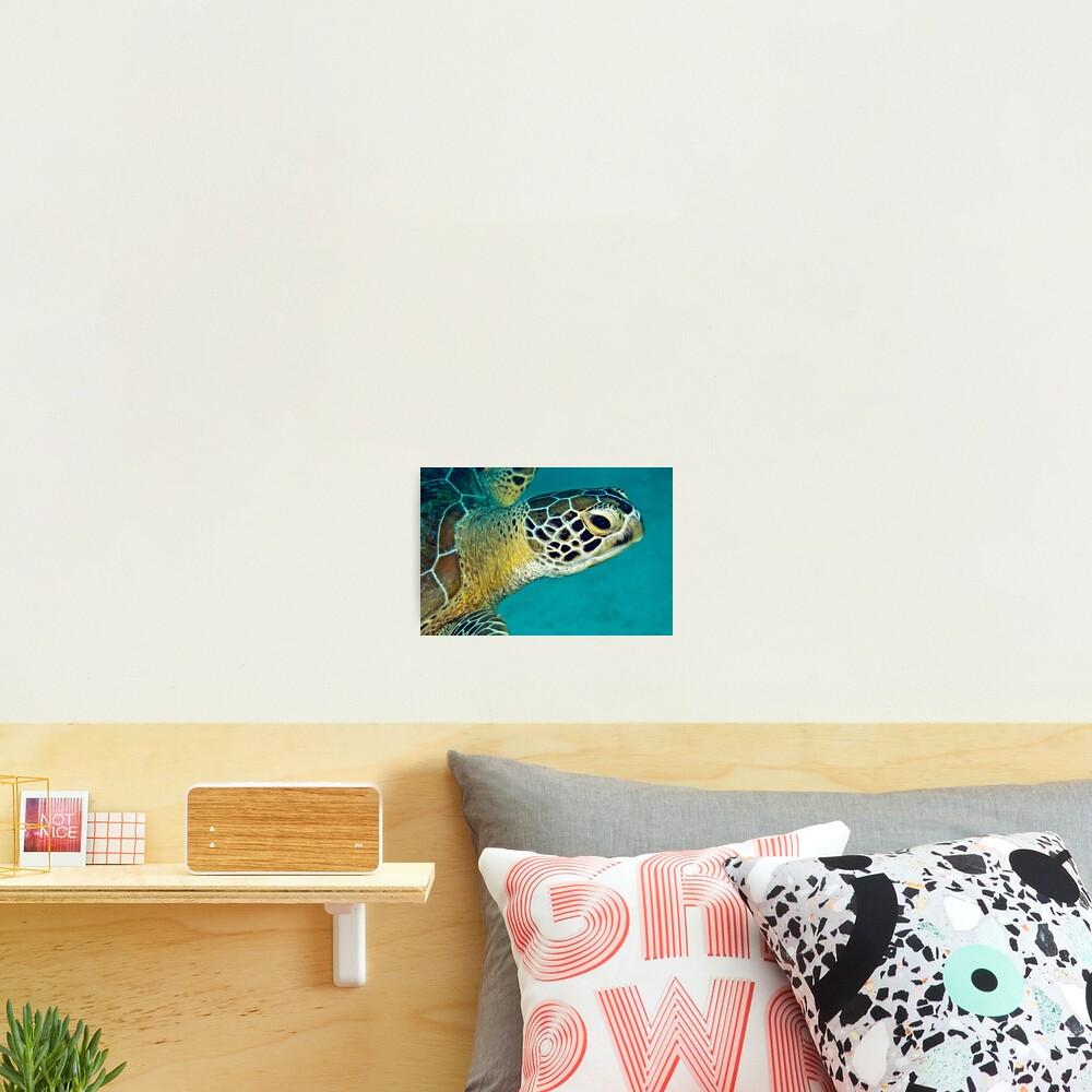 Green sea turtle portrait Photographic Print