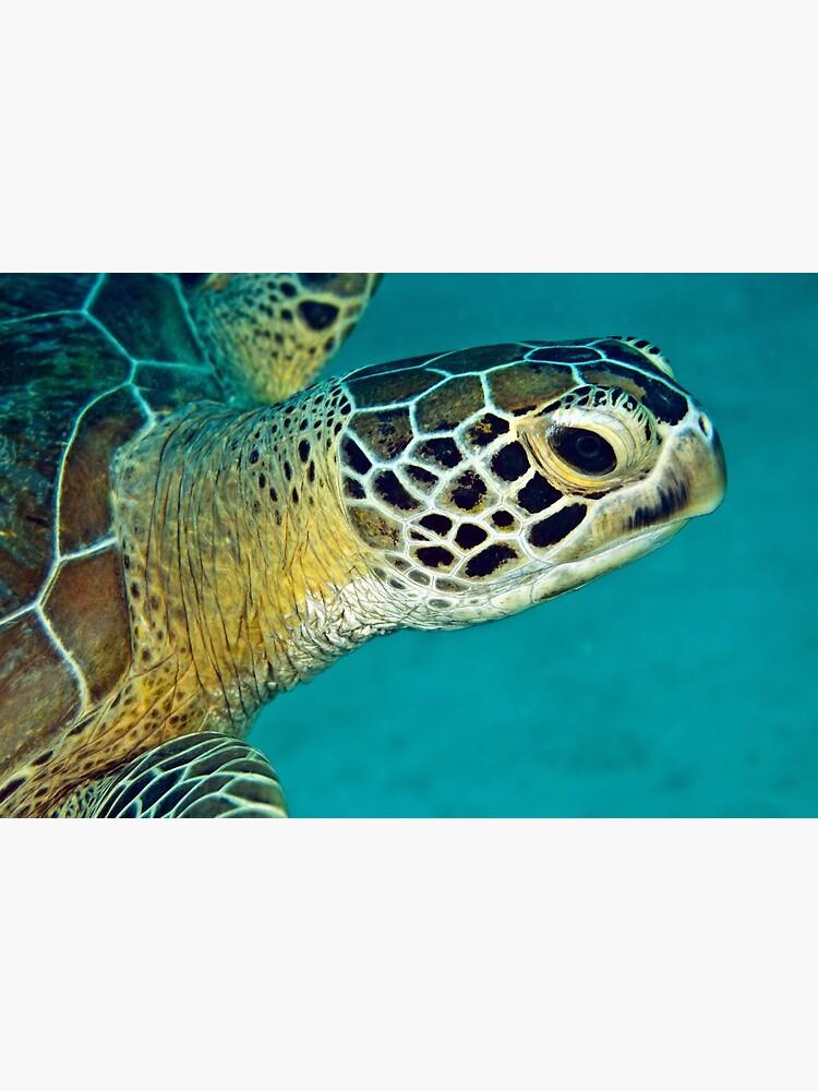 Green sea turtle portrait by DavidWachenfeld