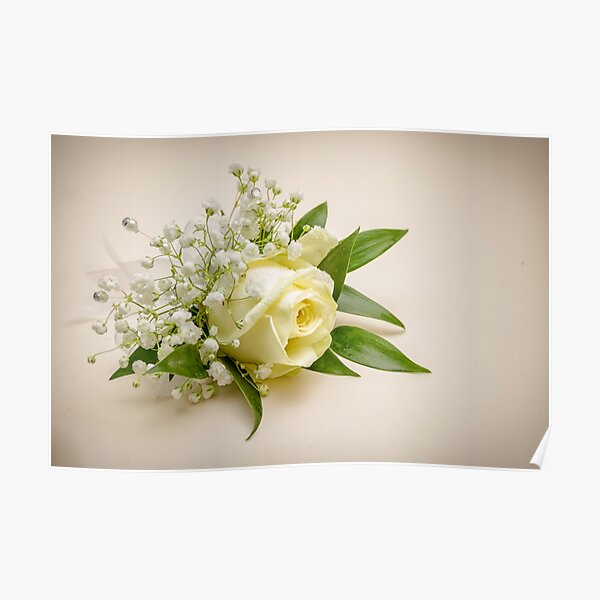 A Cream Rose Buttonhole with Gypsophilia Poster