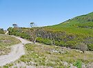 Mt Cameron West Track by Graeme  Hyde