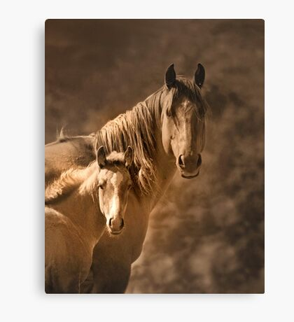 Mare with filly Canvas Print