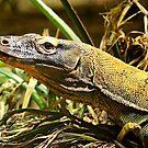 Dragon (Varanus komodoensis) by Scott Mitchell