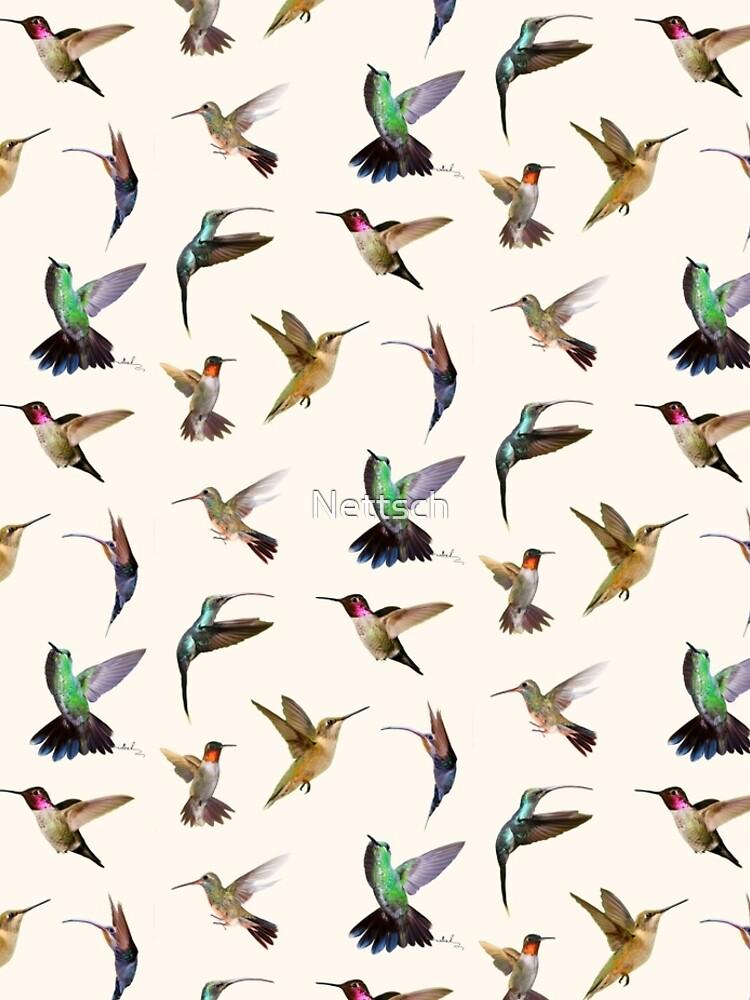 humming-bird by Nettsch