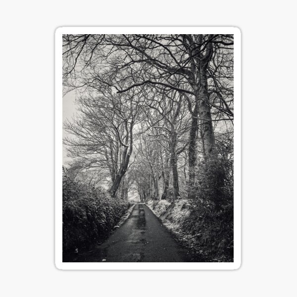 Winter Country Lane with Bare Trees Sticker