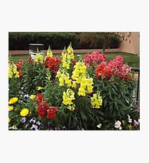 Colorful Snapdragons and More Photographic Print