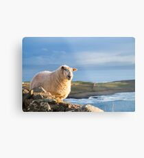 Donegal Sheep Metal Print