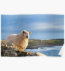 Donegal Sheep Poster