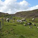 Hirtenszene, Insel Lewis, Äußere Hebriden von BlueMoonRose