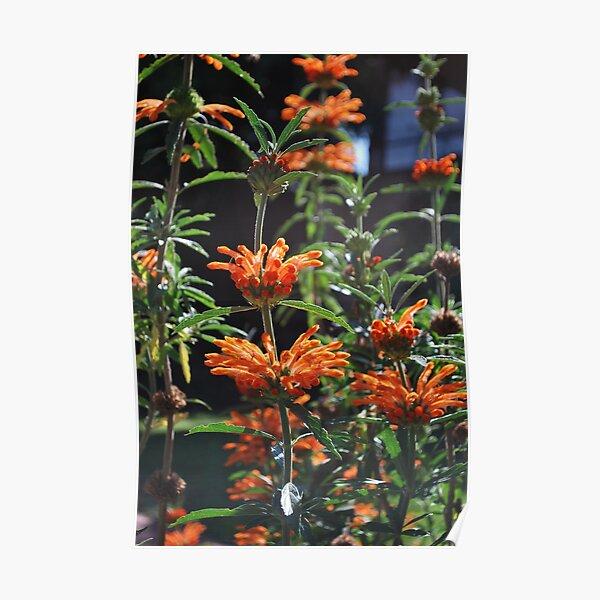 Summer Bursts of Orange Poster