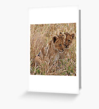 Lion Cubs, Central Kalahari Game Reserve. Botswana, Africa Greeting Card