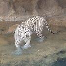 White tiger by Caroline Clarkson