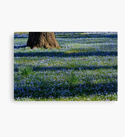 March Bank in Blues  Canvas Print