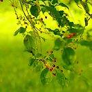 Cherry tree by Bluesrose