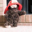 Firehouse Teddy by Liza Williams