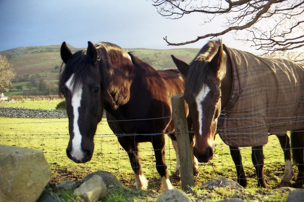 Horses in Llanfairfechan by Michael Haslam