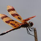 Halloween Pennant by Kane Slater