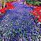 Glorious Flower Gardens