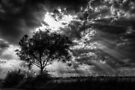 Tree by Nigel Bangert