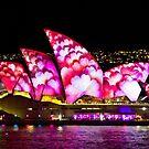 Pink Sails At Night - Sydney Vivid Festival - Australia by Bryan Freeman