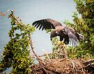 Last one getting ready to fly by Yukondick