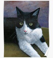 Cat 577 Tuxedo Poster