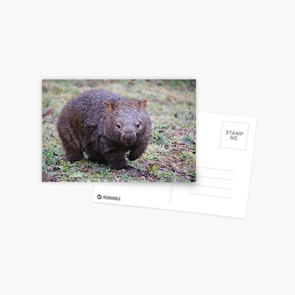 Wombat - Vombatus Ursinus Postcard