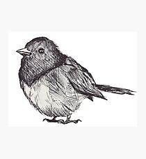Pen Drawn Finch Sketch Photographic Print