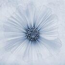 Evanescent Cyanotype by John Edwards