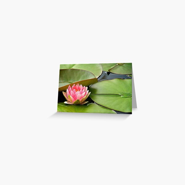 Peaceful Is My Name Greeting Card