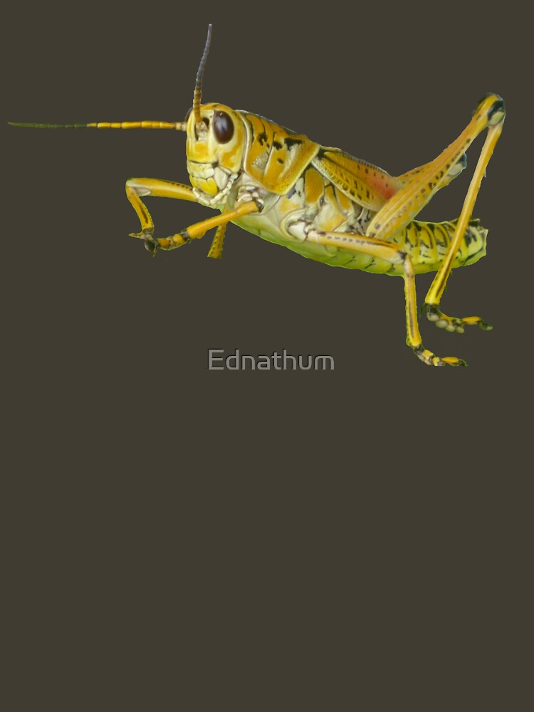 Grasshopper2 by Ednathum
