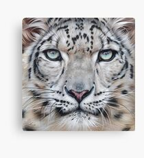 Faces of the wild - Snow Leopard Canvas Print