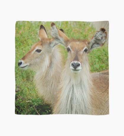 THE YOUNG ONES - THE WATERBUCK - Kobus ellipsiprymnus Scarf
