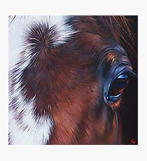 """Equine 1"" Photographic Print"