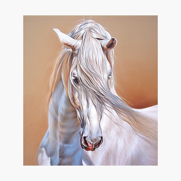 """""""Andalusian stallion"""" - close-up Photographic Print"""