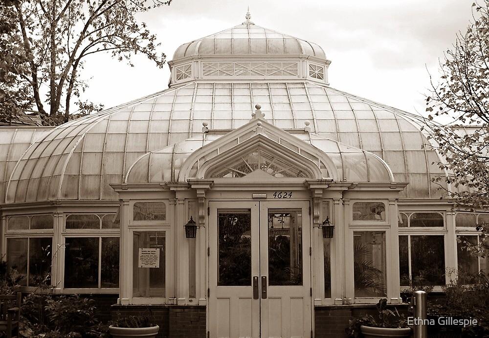 Victorian Conservatory  by Ethna Gillespie