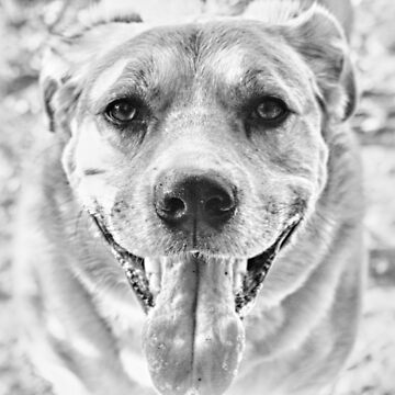 Happy Labrador Dog by InspiraImage