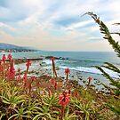 Laguna Beach California Scenic View by K D Graves Photography