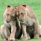 Don`t worry sis the big lions won`t hurt us!! by Anthony Goldman