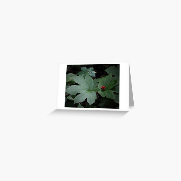Goldenseal with Red Berry Greeting Card