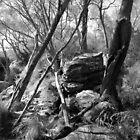 Nellies Glen#3 by Joe Glaysher