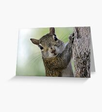 Staring Contest with a Squirrel Greeting Card