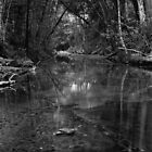 Bola Creek by Joe Glaysher