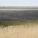 Lake Cooper, Goulburn Valley, Victoria, in drought by Merrilyn Serong