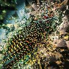 Bird meets glass by Webitect