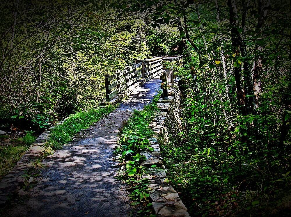 Wild Bridge  by Paul Lubaczewski