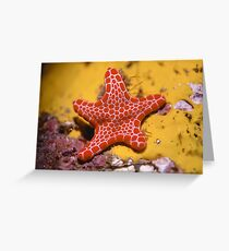 Vermilion Biscuit Star Greeting Card
