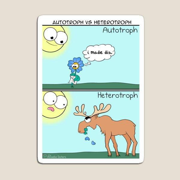 Autotroph vs Heterotroph Magnet