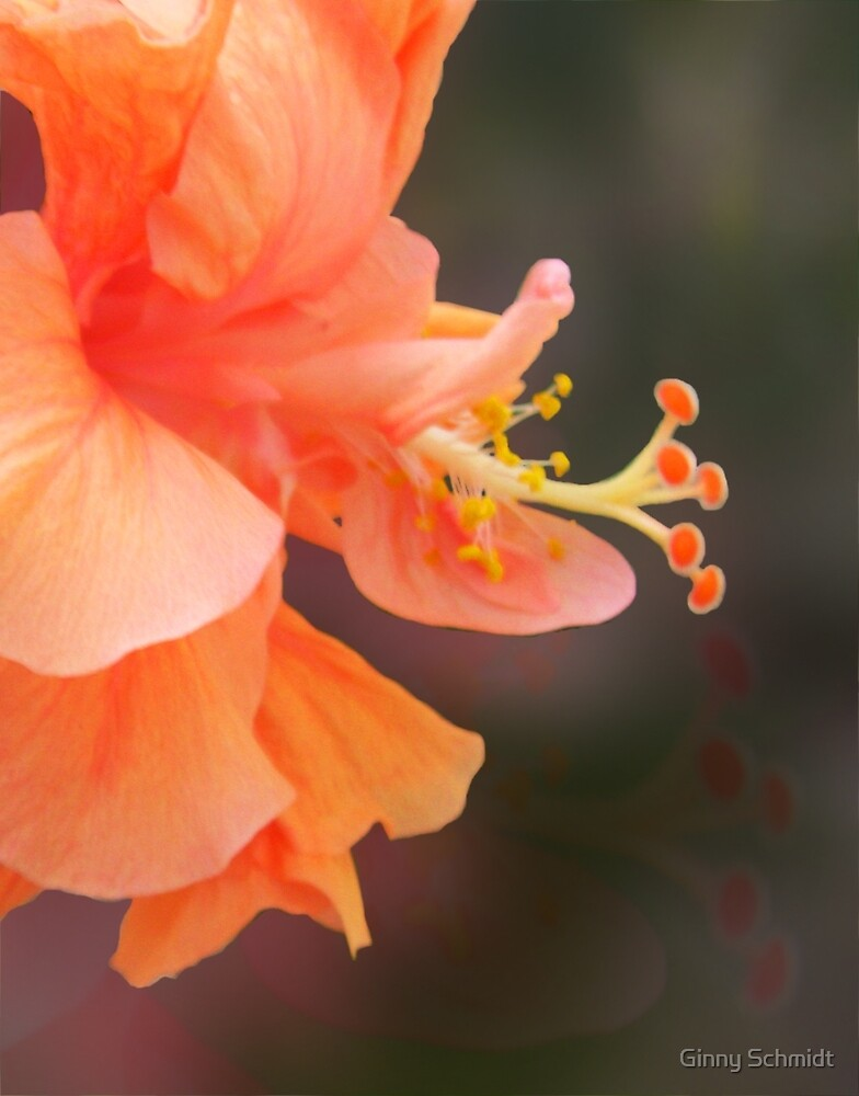 Peach Glow by Ginny Schmidt