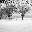 Snow in the park by Linda Marques